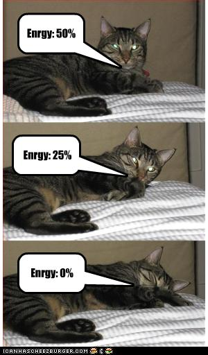 funny-pictures-cat-is-losing-energy